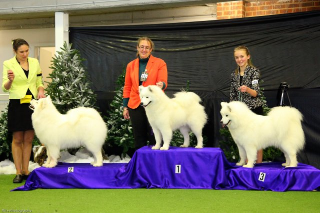 _20130630_National Samoyed Show - Bulla-Vic [ffire] (1 of 04)