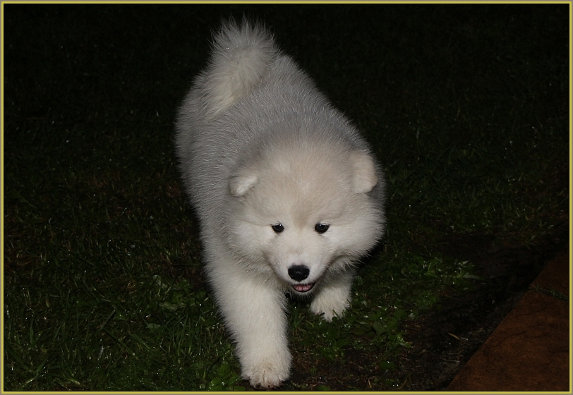 Kimchatka Bomb Alaska (AI) at 8 weeks