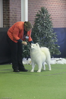 20130630 National Samoyed Show - Bulla-Victoria  163 of 310
