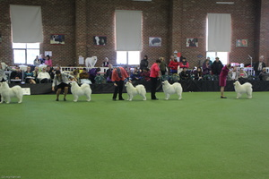 20130630 National Samoyed Show - Bulla-Victoria  267 of 310