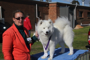 20130630 National Samoyed Show - Bulla-Victoria  270 of 310