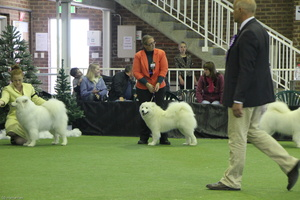 20130630 National Samoyed Show - Bulla-Victoria  305 of 310